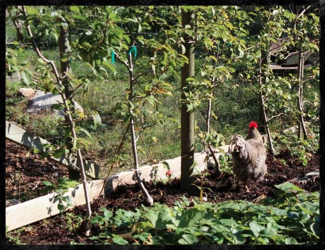 Fireweed Farm | Blue Owl Treats