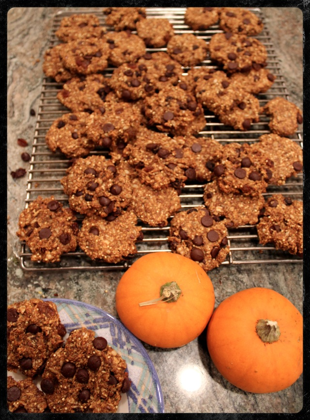 Healthy Harvest Cookies | Blue Owl Treats